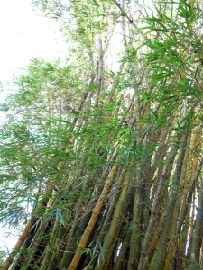 VDV Bamboo