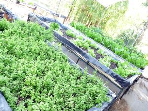 VDV Garden