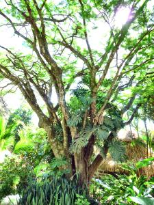 VDV tree