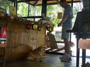 My hubby trying to coax the resident dog, also a love, to look my way.