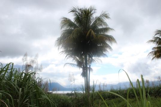 Lake Yojoa Jan 2015